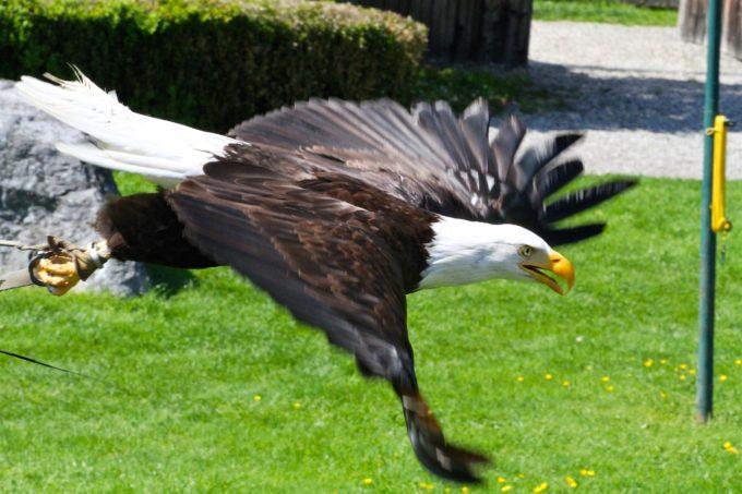 Besuch im Greiffvogelpark